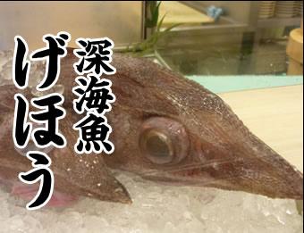 深海魚げほう